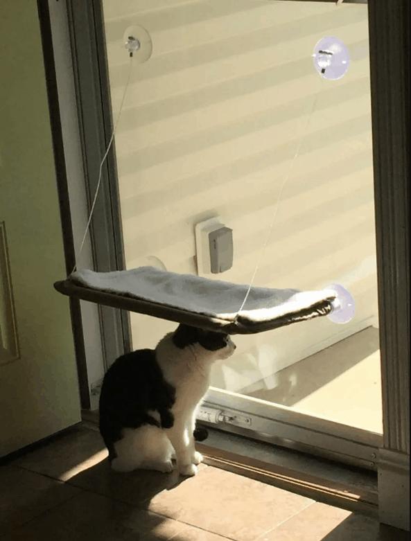 ne yaptığını anlayamadığımız kediler