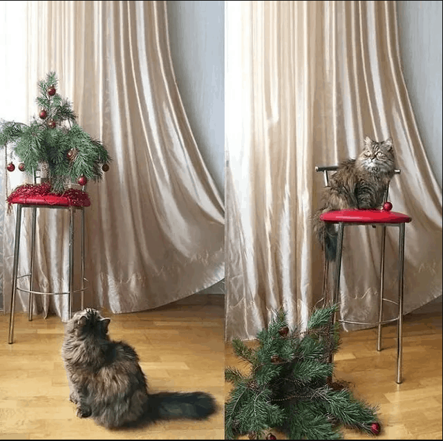kıskanç kediler