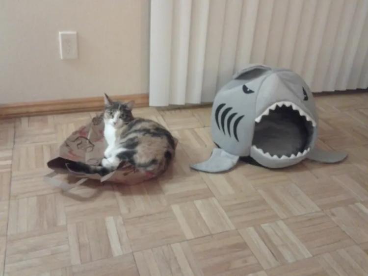 kıymet bilmez kediler