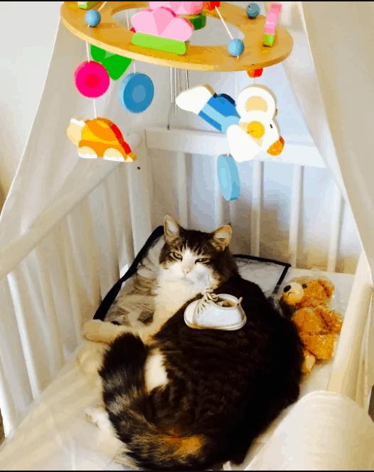 şapşal kediler