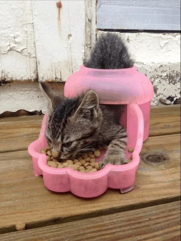 kafası güzel kediler