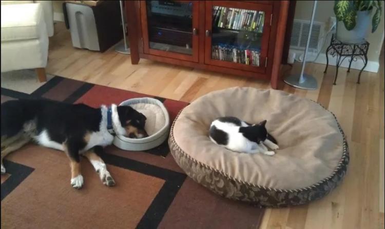 efendi kediler