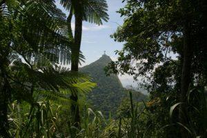tijuca national park, rio de janerio, tijuca ulusal park, tijuca ormanı