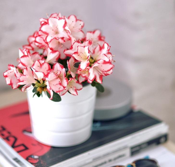 sağlığa faydalı ev bitkileri