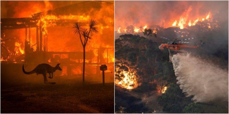 avustralya yangın nedir ile ilgili görsel sonucu