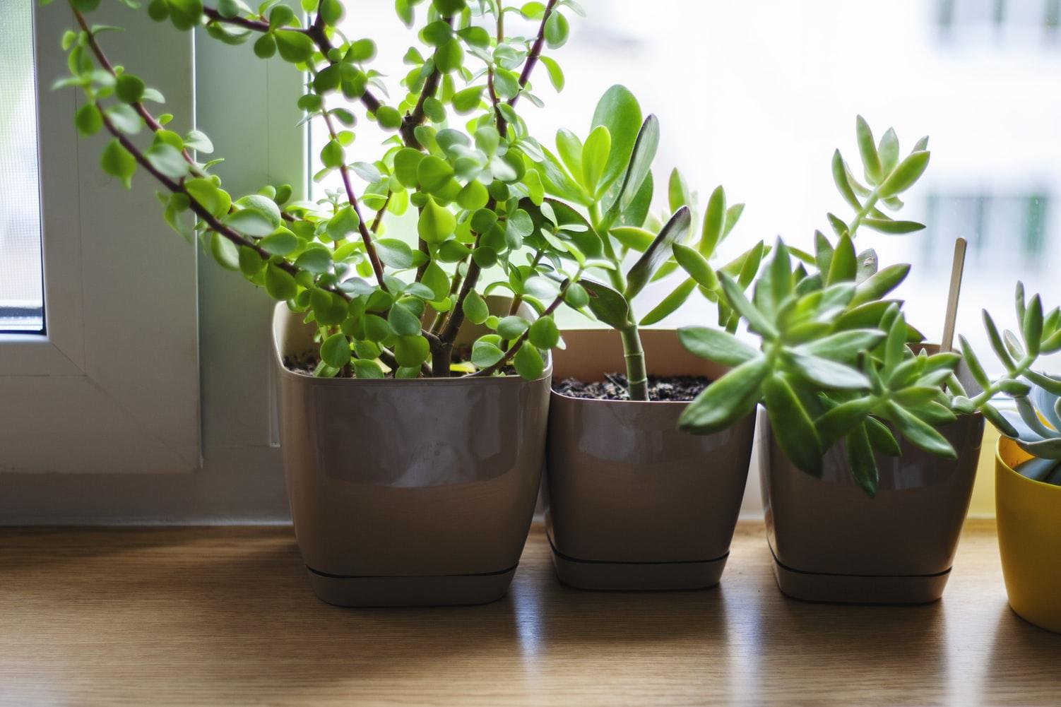 bitki bakımı