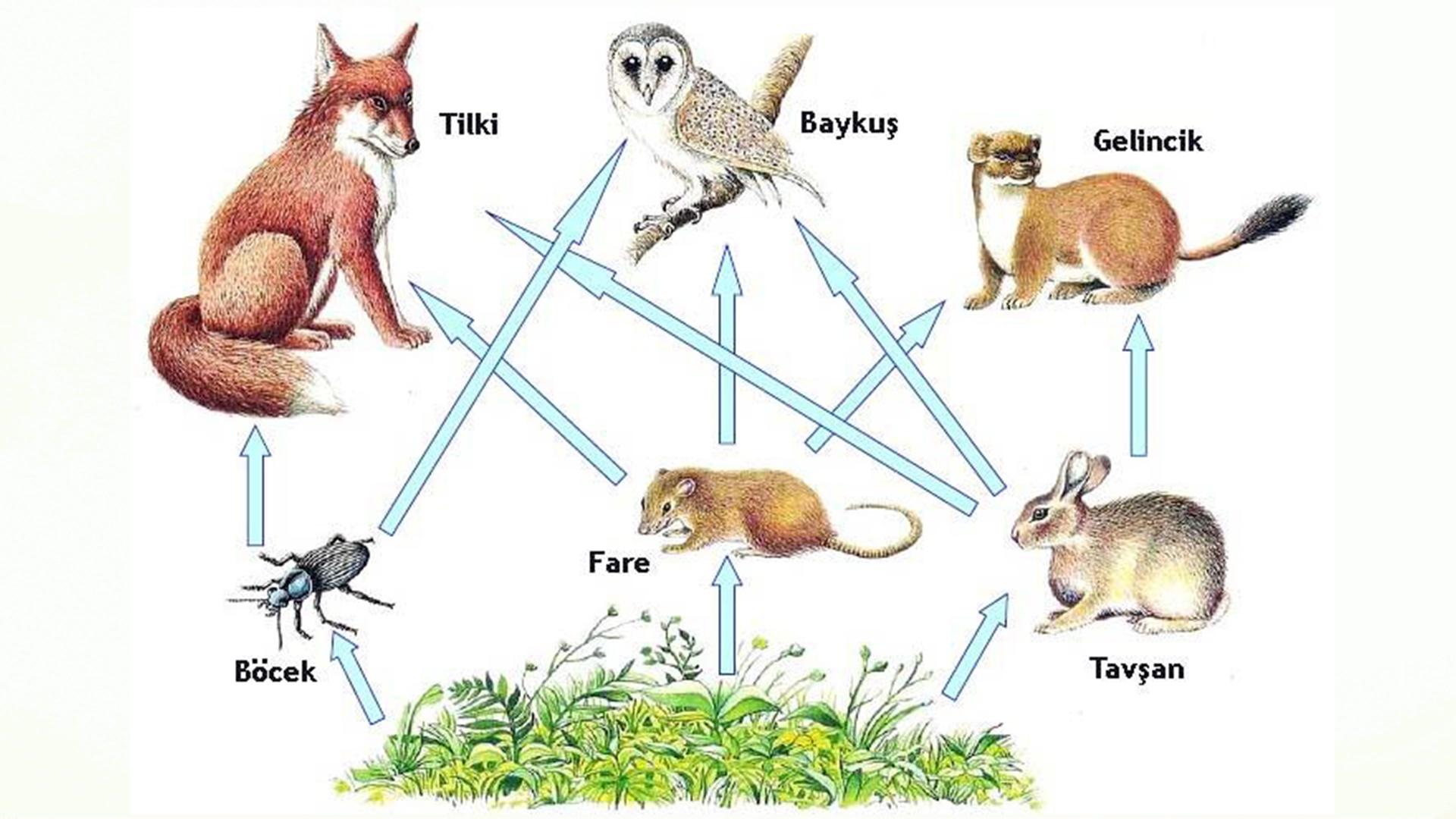 Besin ağı hakkında bilgiler