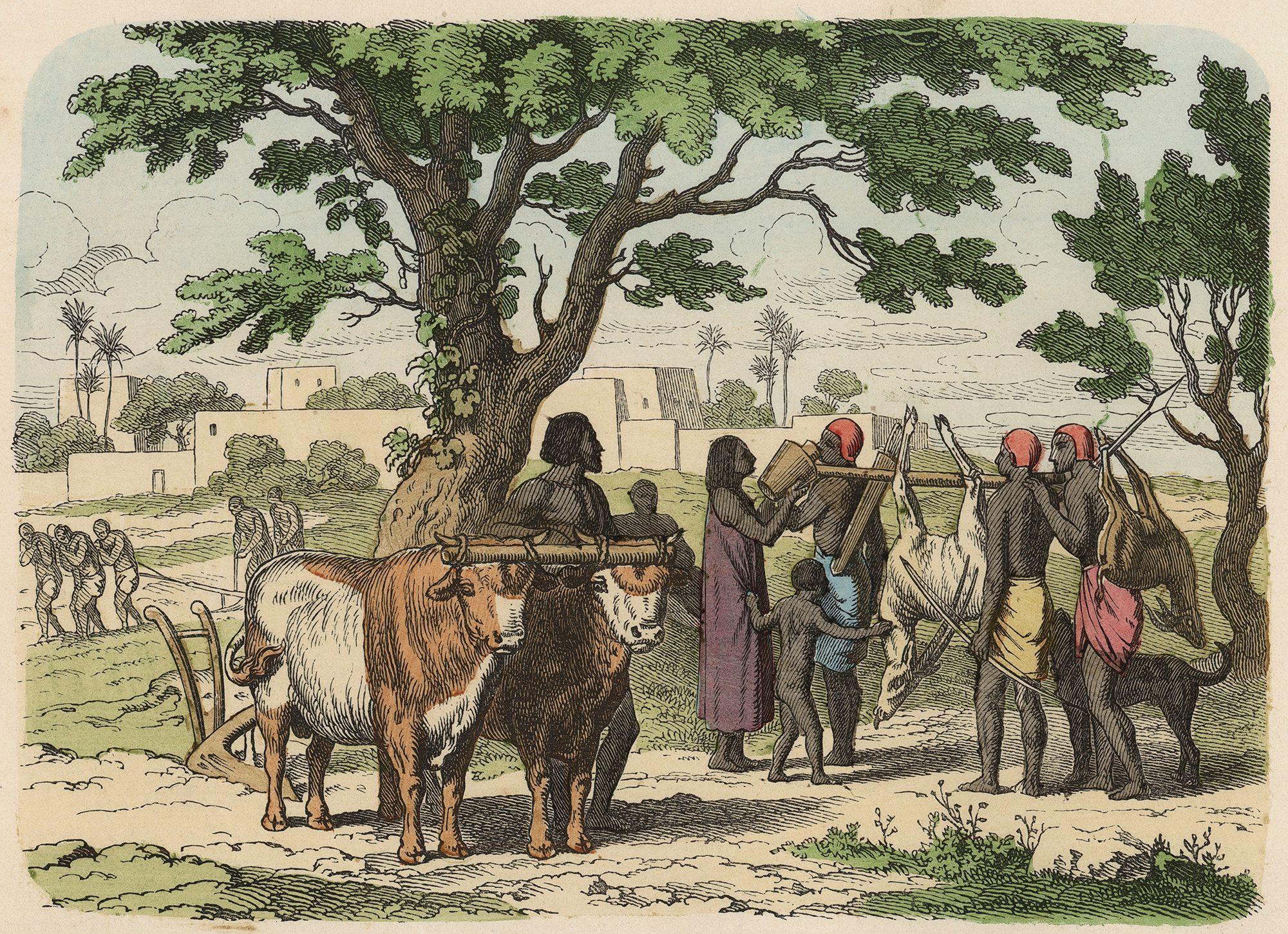 Mezopotamya halkı hakkında bilgiler