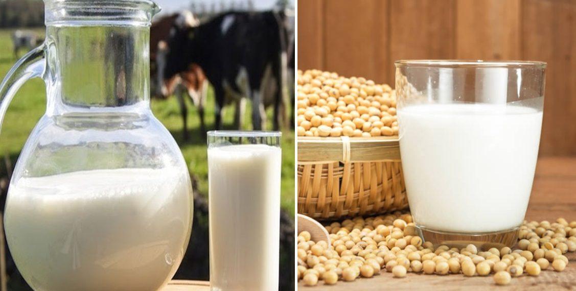 Soya sütü ve inek sütü arasındaki farklar