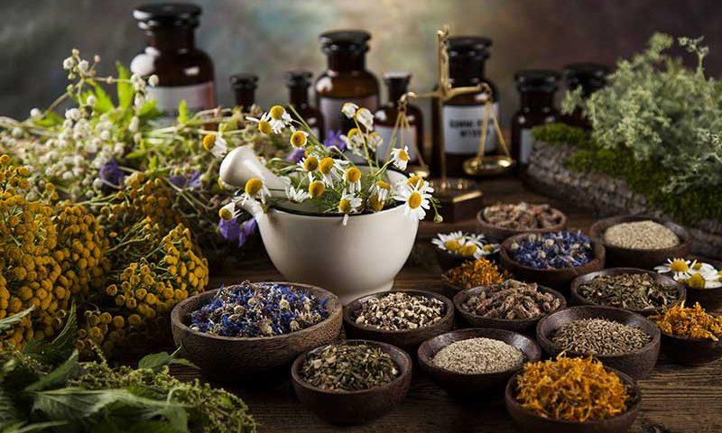 adaptojen bitkiler