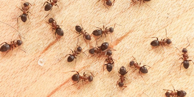 karıncaların