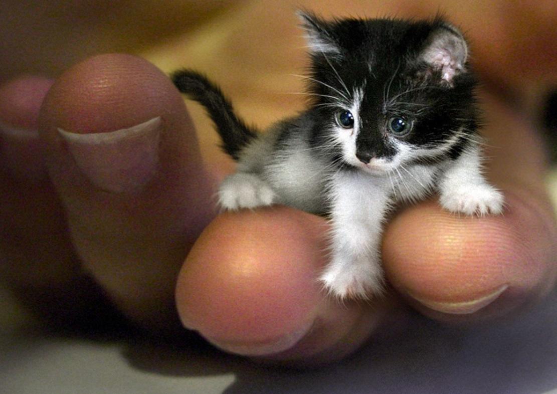 En küçük kedi