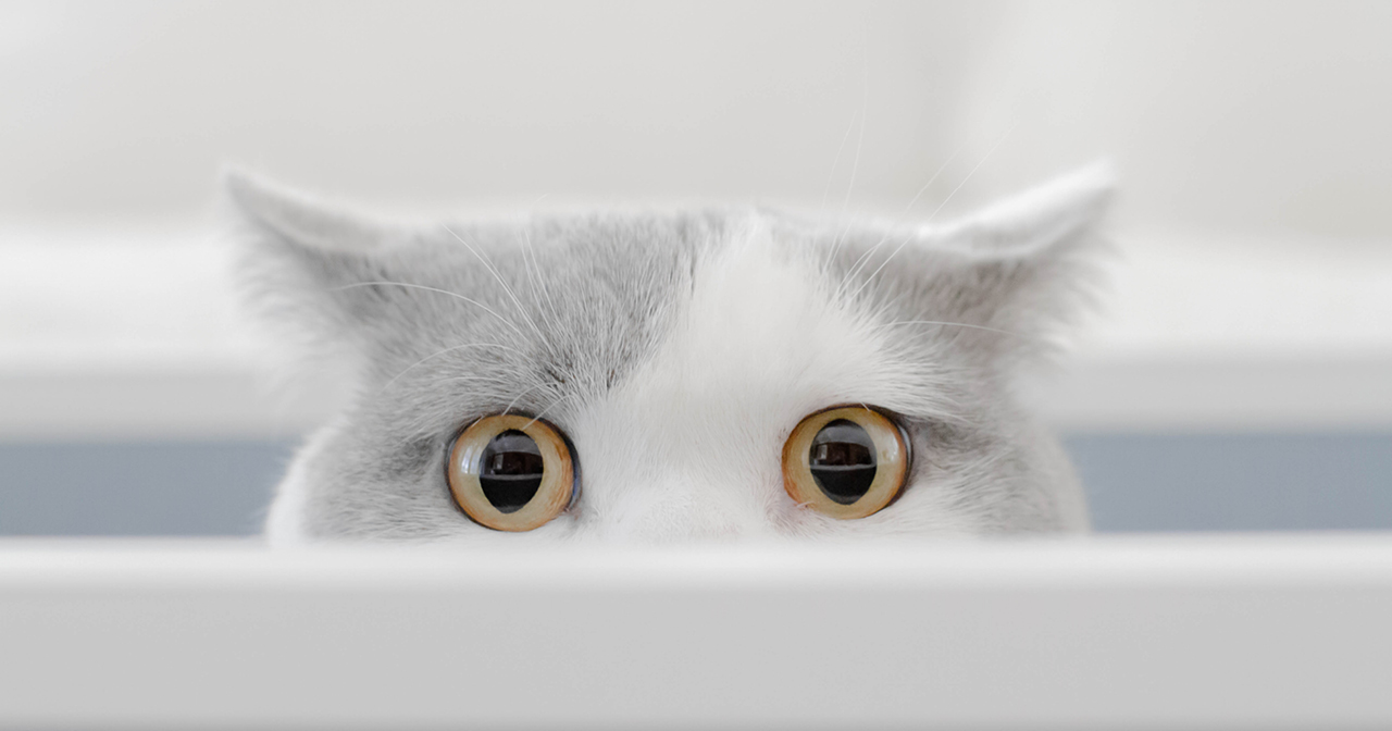 göz kırparak