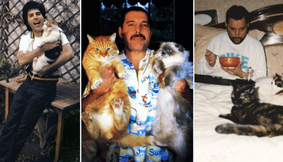 Freddie Mercury ve kedileri