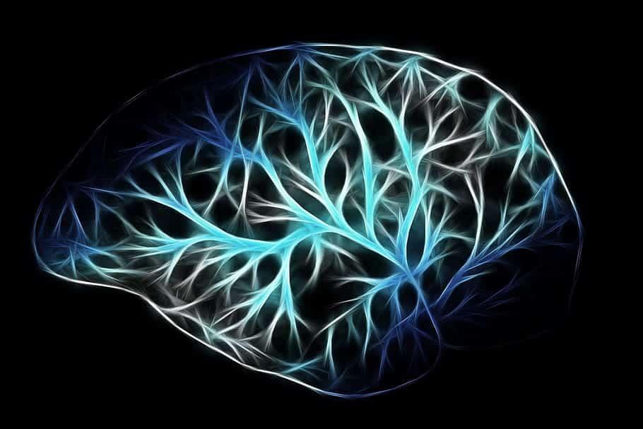 beyninin