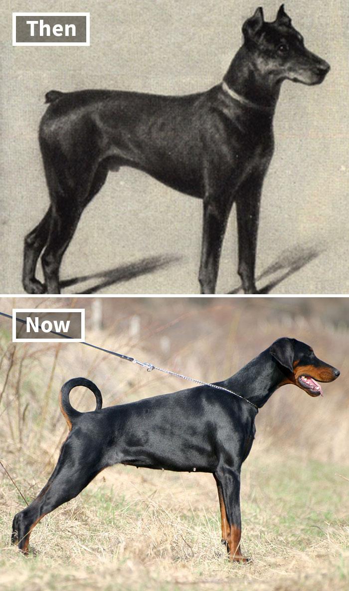 köpek ırklarının