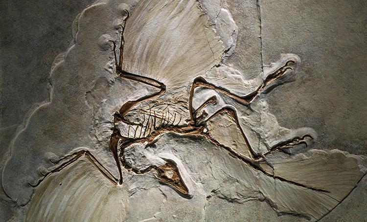 archaeopteryx kuş dinozor kayıp hazineler listelist