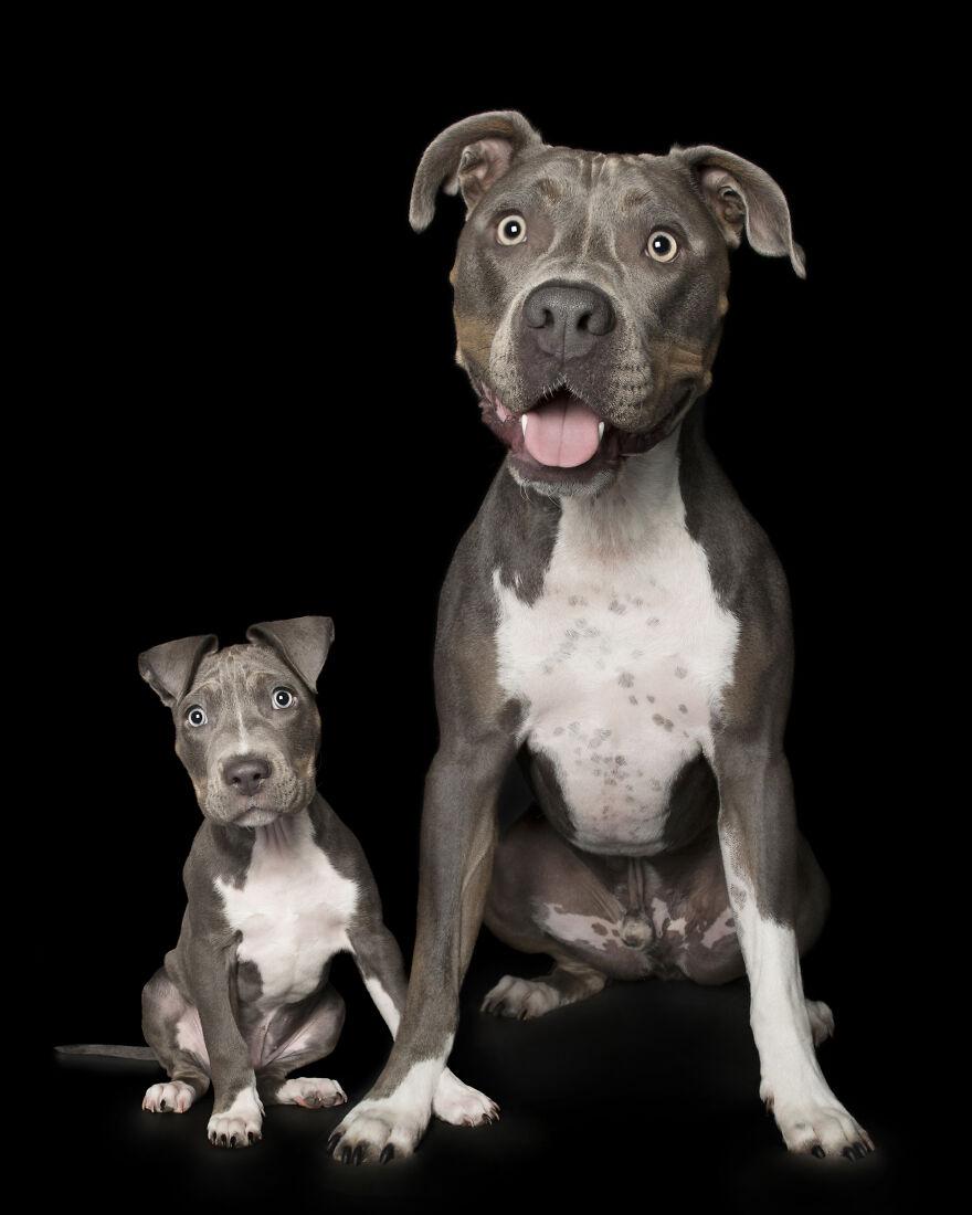köpeklerin