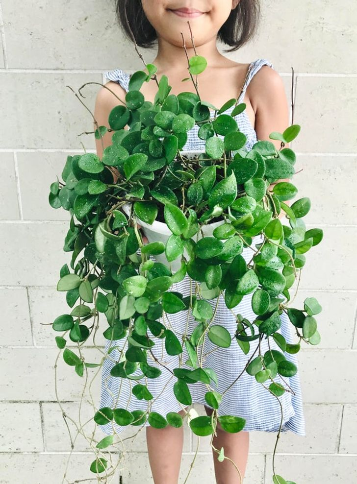 sukulent bitkileri