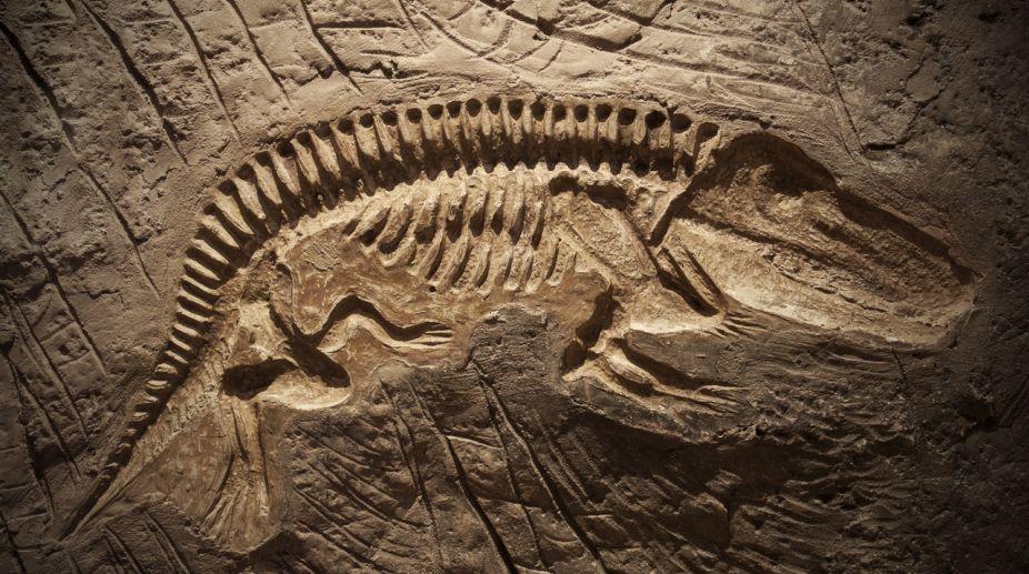 İlk fosil