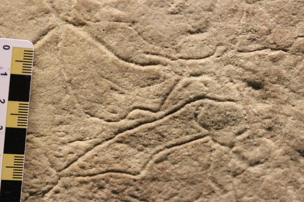 Fosil türleri