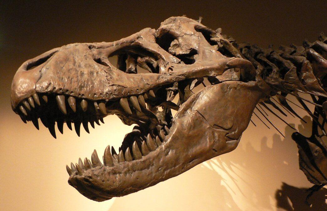 Fosilin anlamı