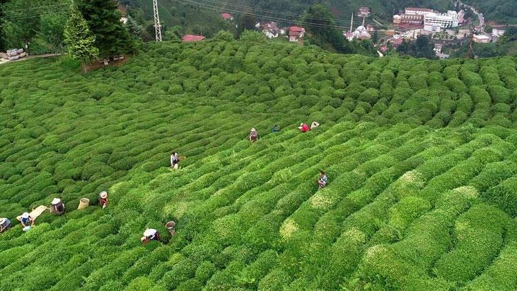 çay ihracatı