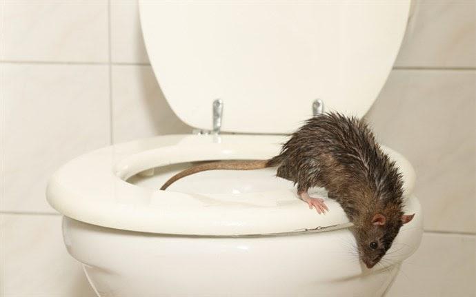 klozet fare efsanesi gerçek şehir efsaneleri listelist