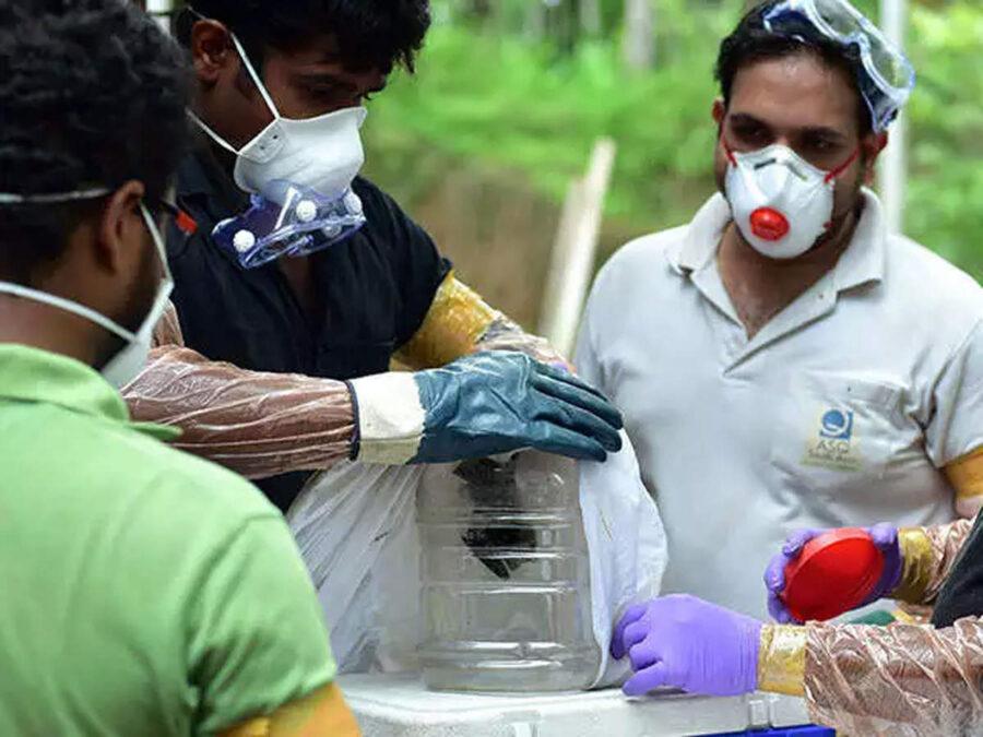nipah virüsü