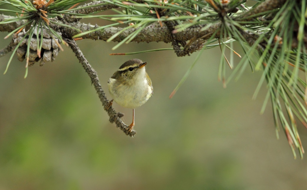 Türkiye'deki küçük kuşlar