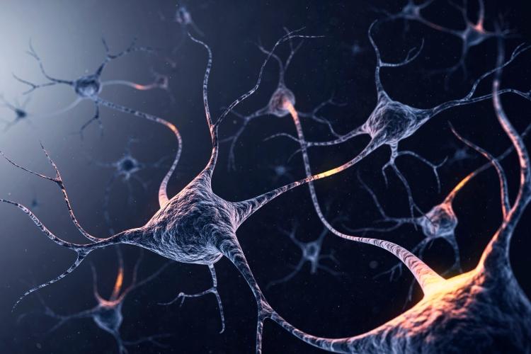 ayna nöronlar