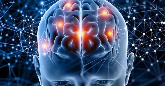 insan beyni