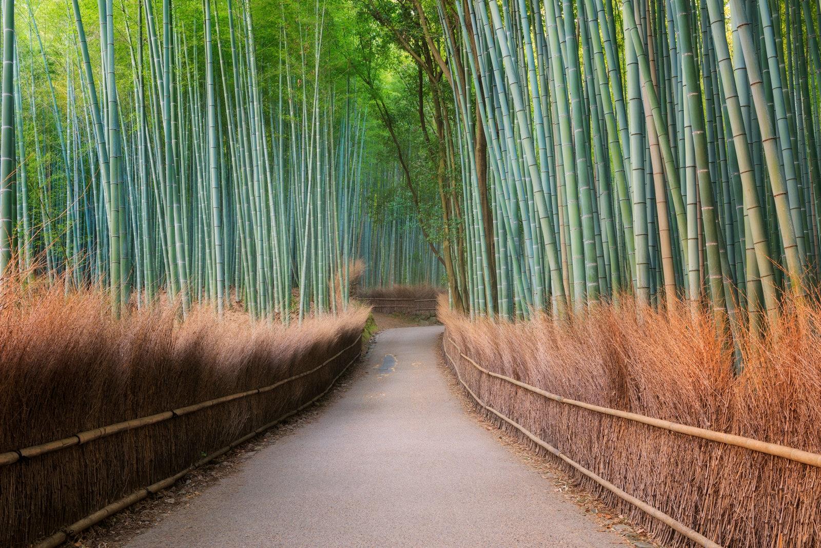 Arashiyama Bamboo Grove, Japonya