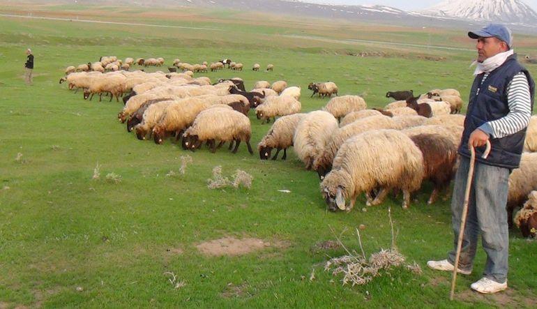 hayvancılık sorunları türkiye