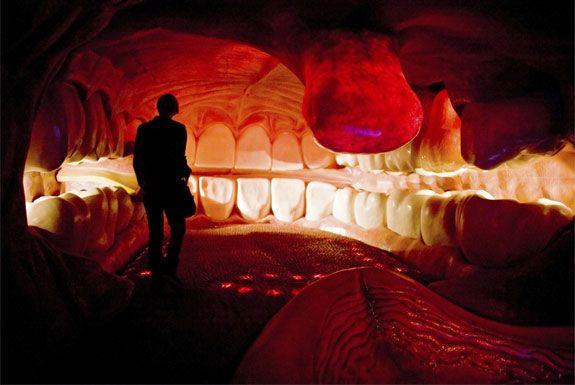 hollanda corpus müzesi insan vücudu organ teknoloji listelist