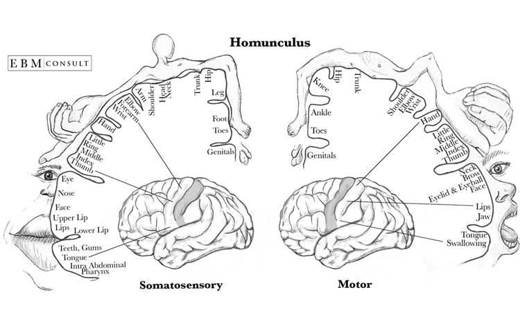 öpüşmenin tarihçesi neden dudaktan öpüşülür neden öpüşürüz listelist evrim biyoloji duyusal beyin