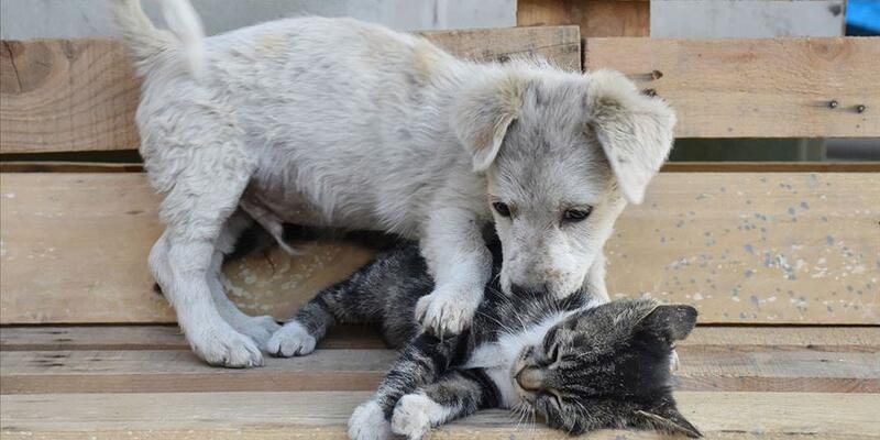 Hayvanları Koruma Kanunu