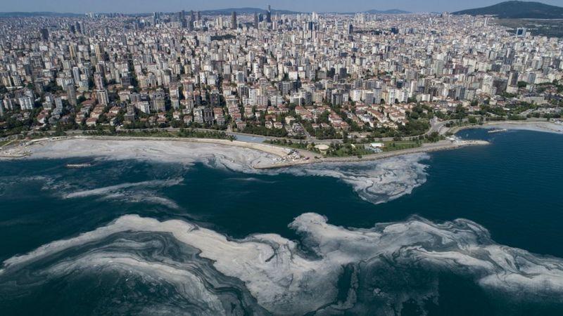 deniz salyası