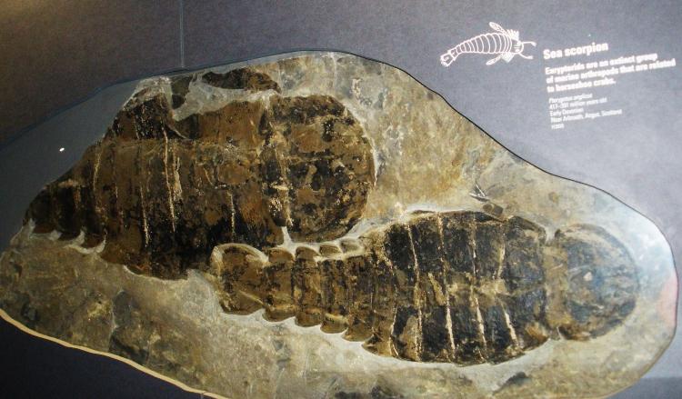 tarih öncesi yaratıklar