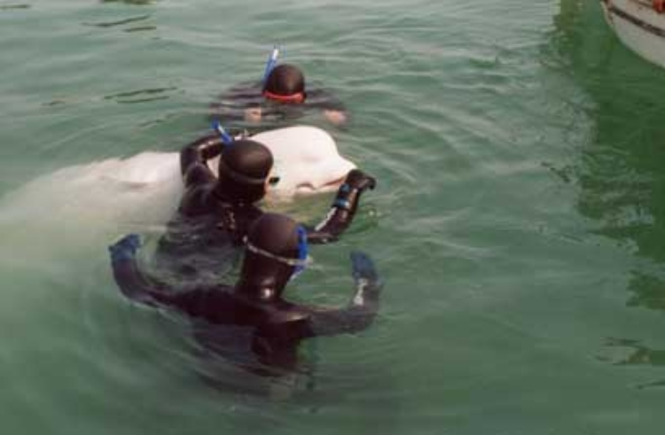 beyaz balina
